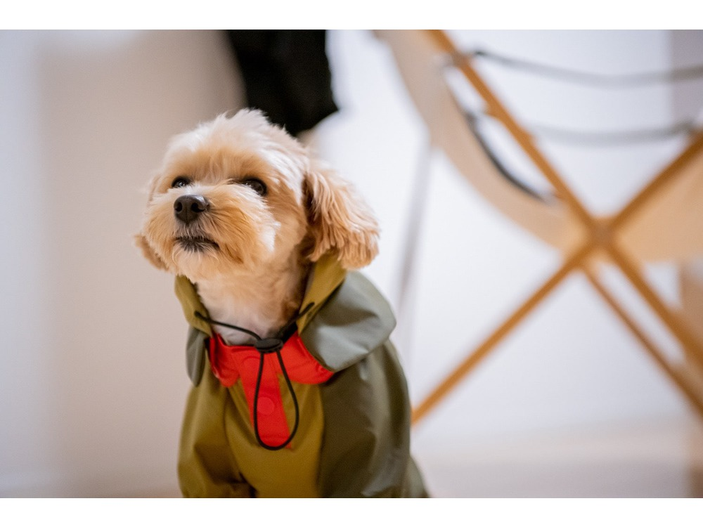 SP Dog Rain Guard M Black